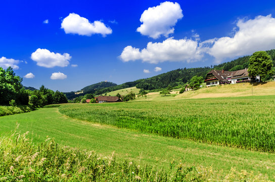 Nature. The countryside in Germany.