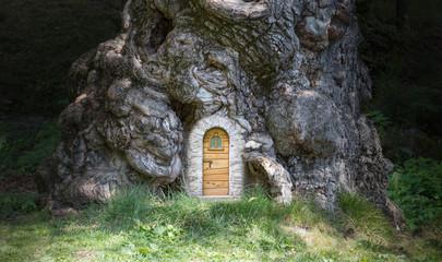 La casa nell'albero - The house in the tree