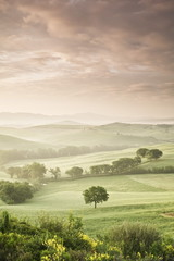 Single tree at sunrise, Val D'Orcia, UNESCO World Heritage Site, Province Siena, Tuscany, Italy, Europe
