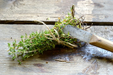Bunch of thyme with vintage special knife for cutting herbs.