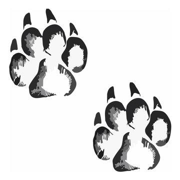 Footprints of a big cat4-vector