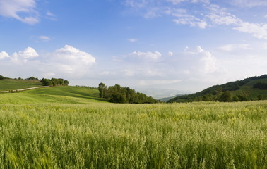 View over a grainfield to Monte Amiata, Val D'Orcia, Province Siena, Tuscany, Italy, Europe