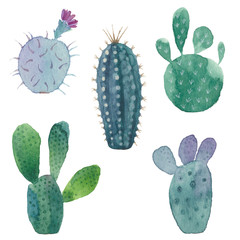 Cactus seamless pattern on white background. Vector, watercolor