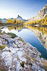 The peak of the Becco di Mezzodi, in the Dolomites, reflecting in the Federa lake, surrounded by yellow larches, Trentino-Alto Adige, Italy, Europe