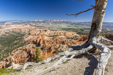 Bryce Canyon Amphitheater from Bryce Point, Bryce Canyon National Park, Utah, United States of America, North America