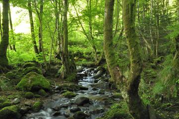 rivière en foret