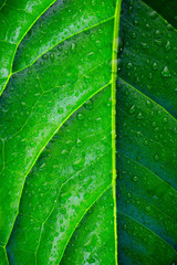 large green leaf with water drops close-up