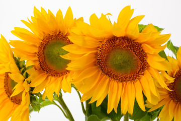 Close-up of yellow sunflowers.