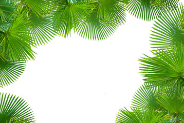 Tropical palms on white background for text