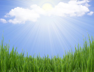 Green grass and sun light