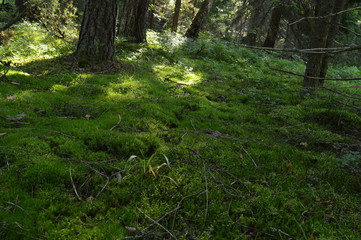 Sunlight on the forest floor of moss cover the following wild animals