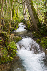 Beautiful mountain stream in the Bavarian Alps