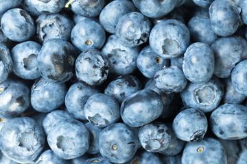 Harvest of blueberry