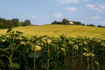 Colline marchigiane, Ancona, Marche, Italia