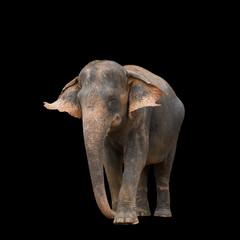Elephant on black background