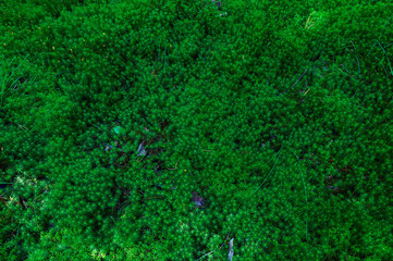 moss on a forest floor background