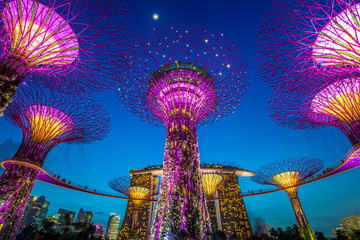 Poster de jardin Singapoure Supertrees at Gardens by the Bay