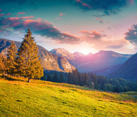 Fototapete - Colorful summer morning in the Triglav national park