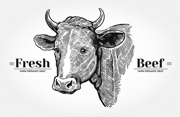 "Cows head, hand drawn in a graphic style. With the words ""Fresh beef""."