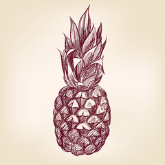 fruit pineappl hand drawn vector llustration realistic sketch