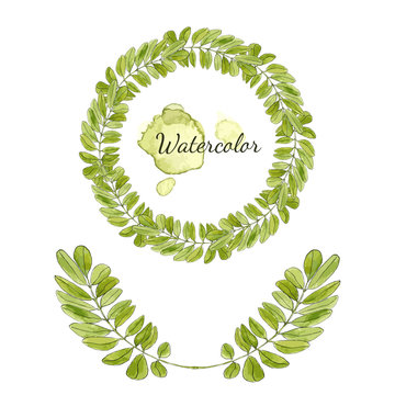 Watercolor acacia leaves decoration. Round frame isolated. Hand drawn vector wreath.