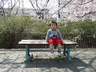 子ども ベンチ 桜