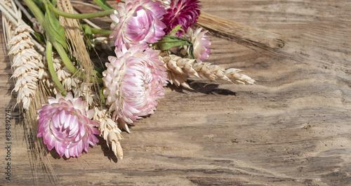 strohblumen helichrysum und korn hren auf altem treibholz holz brett stockfotos und. Black Bedroom Furniture Sets. Home Design Ideas