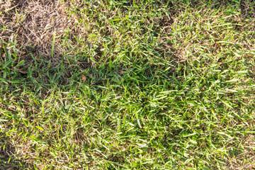 Small green grass