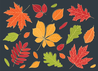 A big set of images of leaves of different trees. Fall of the leaves. Autumn leaves are drawn with chalk on black chalkboard. Sketch, design elements. Vector illustration.