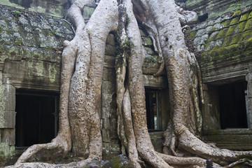 Jungle still covers parts of the temple complex at Ta Prohm.near Seim Reap,Cambodia..