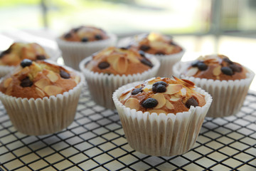 Homemade apricot chocolate chip almond slice muffins