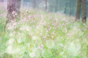Blurred spring wildflower meadow with bokeh for background.