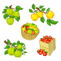 Vintage colorful apple harvest set. Fully editable EPS10 vector.