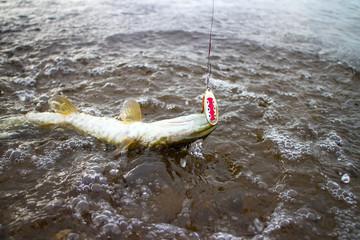 pike fishing Northern fish