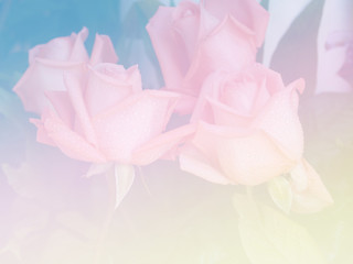 Keuken foto achterwand Dahlia Sweet color flower for background design soft and blur style