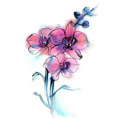 three purple orchid, branch, flower, watercolor sketch on white background