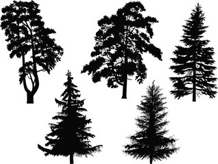 five black coniferous trees isolated on white
