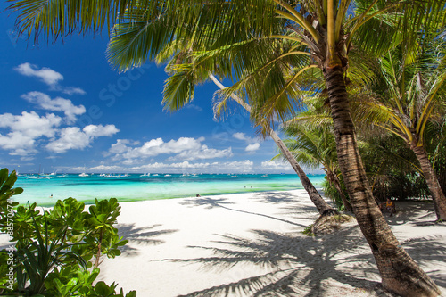 Fototapete Tropical beach with palm and white sand