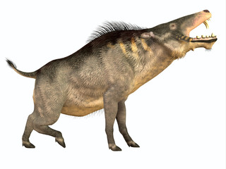 Entelodon Side Profile - Entelodon was an omnivorous pig that lived in Europe and Asia in the Eocene through the Oligocene Periods.