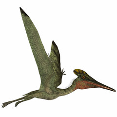 Pterodactylus Side Profile - Pterodactylus was a flying carnivorous reptile that lived in the Jurassic Period of Bavaria, Germany.