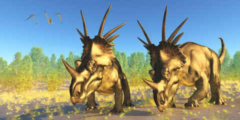 Styracosaurus Dinosaurs - A flock of Pterodactylus reptiles fly over two Styracosaurus dinosaurs during the Cretaceous Period of Alberta, Canada.