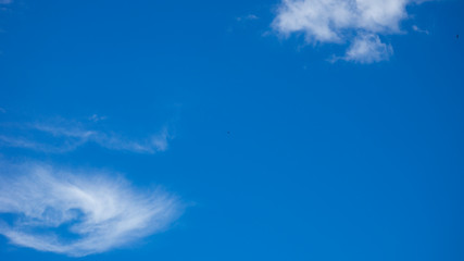 blue sky background with tiny clouds and bird