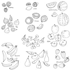 froots and berries vector set