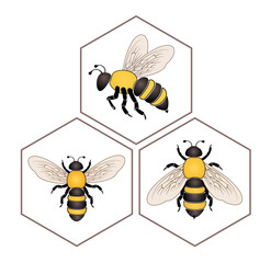 Bee on honey cell set isolated on white background vector eps 10