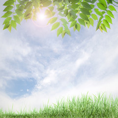fresh green leaves ,natural green background