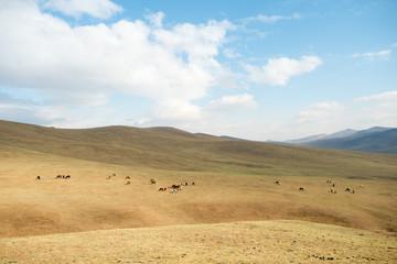 Horses on a Mongolian Landscape