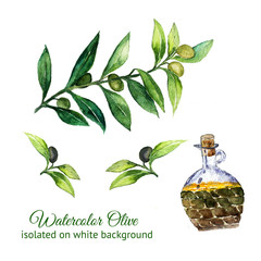 watercolor hand drawn olive branches with glass bottle isolated