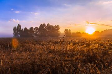Fototapeta Wschód słońca nad polami uprawnymi obraz