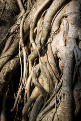 Roots of tree.