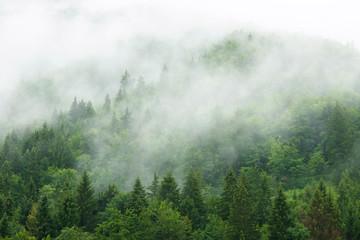Fototapeten Wald Misty forest
